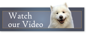 Our video at Veterinarians in Homewood Flossmoor IL