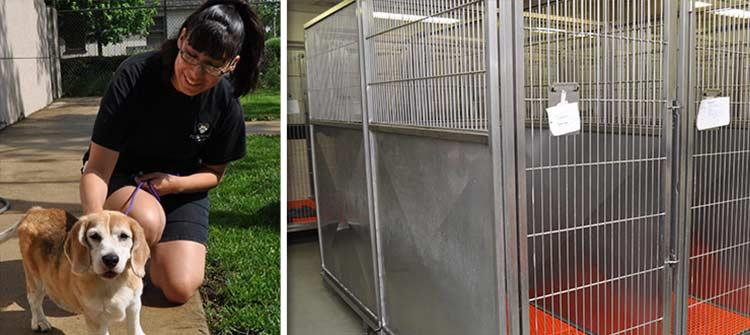 Pet boarding at Flossmoor Animal Hospital