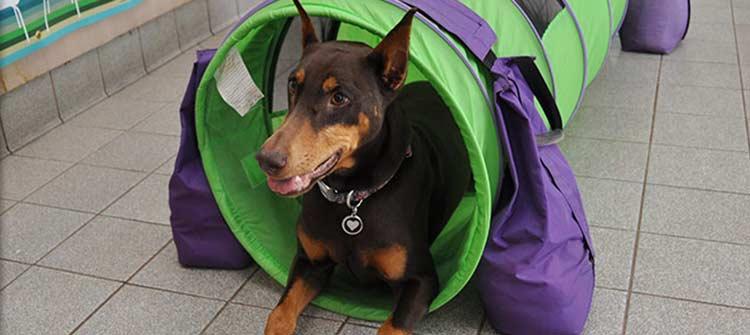 Dog training at Flossmoor Animal Hospital