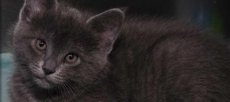 Kitten Care at Flossmoor Animal Hospital