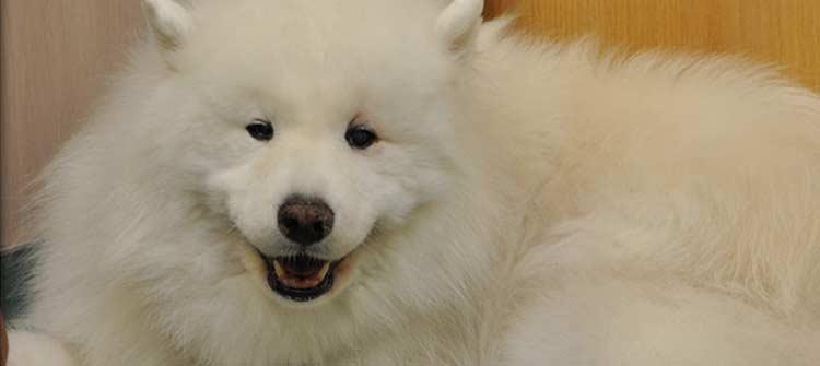 Flossmoor Animal Hospital provides Canine Senior Care